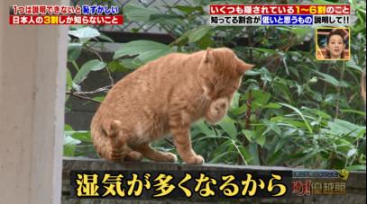 ハナタカ優越館1026ネコ.jpg