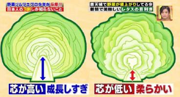 ハナタカ優越館824レタス芯の高さ.jpg