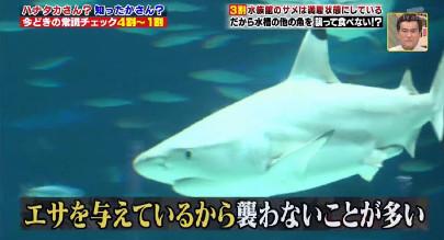 ハナタカ優越館907サメ.jpg