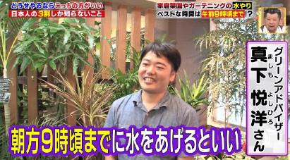 ハナタカ優越館914植物.jpg
