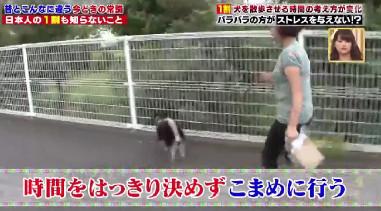 ハナタカ優越館921いぬ.jpg
